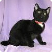 Adopt A Pet :: Renita - Powell, OH