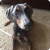Adopt A Pet :: Belle - New Richmond, OH