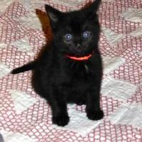 Adopt A Pet :: Chiara - Santa Cruz, CA