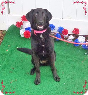 Labrador Retriever Mix Puppy for adoption in Marietta, Georgia - CORA