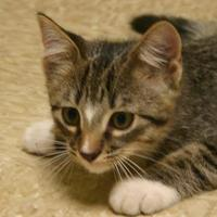 Adopt A Pet :: Orion - Hastings, NE