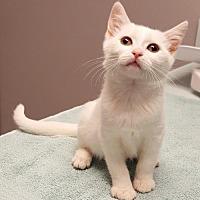 Adopt A Pet :: Smudge - Palo Alto, CA