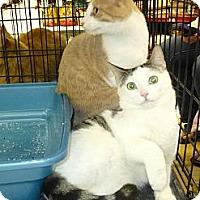 Adopt A Pet :: Snugglie - College Station, TX