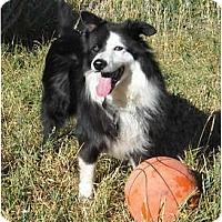 Adopt A Pet :: Laddy - Glenrock, WY