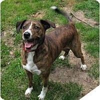 Adopt A Pet :: Jake - in Maine!! - kennebunkport, ME