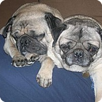 Adopt A Pet :: Macy - Avondale, PA