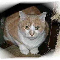 Adopt A Pet :: Rocky - Montgomery, IL