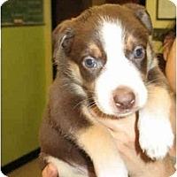 Adopt A Pet :: Rene - Kingwood, TX