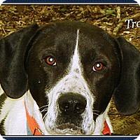 Adopt A Pet :: Troy - Franklinton, NC