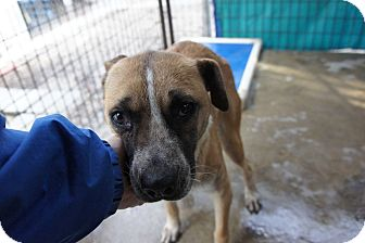 Terrier (Unknown Type, Medium) Mix Dog for adoption in Henderson, North Carolina - Mabry*