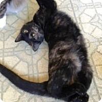 Adopt A Pet :: Kit - Colmar, PA