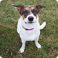 Adopt A Pet :: Ella - Drumbo, ON