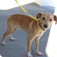 Adopt A Pet :: Todd - West Warwick, RI