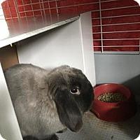 Adopt A Pet :: Poppy - Libertyville, IL