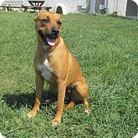 Adopt A Pet :: NUTTER BUTTER - LaGrange, KY