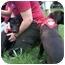 Photo 1 - Labrador Retriever Mix Puppy for adoption in Naugatuck, Connecticut - Whammy