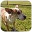 Photo 1 - Australian Cattle Dog Mix Dog for adoption in El Cajon, California - Emmy
