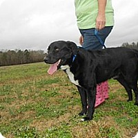 Adopt A Pet :: Big Boy - Southampton, PA