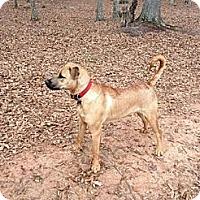 Adopt A Pet :: *JESSIE - Winder, GA