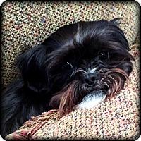 Adopt A Pet :: EMBER - ADOPTION PENDING - Jackson, MS