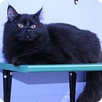 Adopt A Pet :: Sambuca - Mission, BC