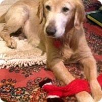 Adopt A Pet :: Jack - New Canaan, CT