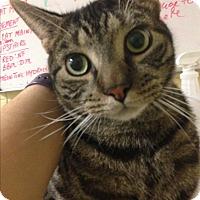 Adopt A Pet :: Bob - Rockaway, NJ