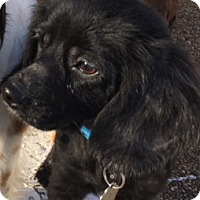 Adopt A Pet :: Bunny Lou - Sugarland, TX