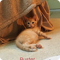 Adopt A Pet :: Buster and Sissy - Southington, CT
