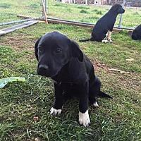Adopt A Pet :: Beth - Lindale, TX