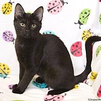 Adopt A Pet :: Penny - St Louis, MO