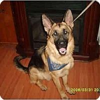 Adopt A Pet :: Magnum - Hamilton, MT
