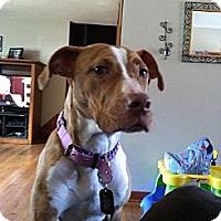 Adopt A Pet :: Nala - Berlin, CT