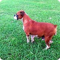 Adopt A Pet :: Cynthia - Marion, IL