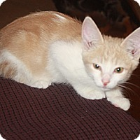 Adopt A Pet :: Chester - Loveland, CO