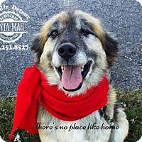 Adopt A Pet :: LOKI - Upper Sandusky, OH