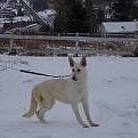 Adopt A Pet :: KELLY - Tully, NY