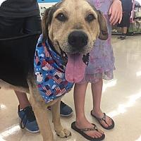 Adopt A Pet :: Bud (courtesy listing patty) - Homestead, FL