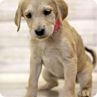 Adopt A Pet :: Pidgey - Waldorf, MD