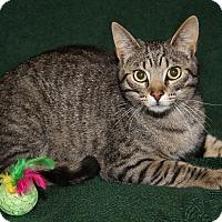 Adopt A Pet :: Romano (Neutered) - Marietta, OH