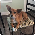 Adopt A Pet :: Rockin Roxy