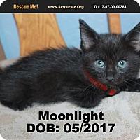 Adopt A Pet :: Moonlight - Chandler, AZ
