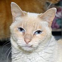 Adopt A Pet :: Penny - Independence, MO