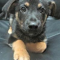Adopt A Pet :: Harry * ADOPTED * - Trenton, NJ