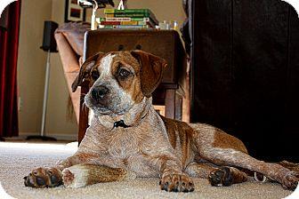 Boxer Mix Puppy for adoption in Marietta, Georgia - Beau