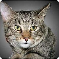 Adopt A Pet :: Bridget - Montgomery, IL