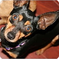 Adopt A Pet :: Shadow - Pending - Vancouver, BC