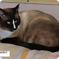 Adopt A Pet :: Hardly - Crescent City, CA