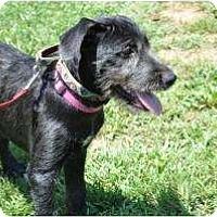 Adopt A Pet :: Lilly-Belle - Douglasville, GA