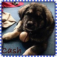 Adopt A Pet :: Cash - New Boston, NH